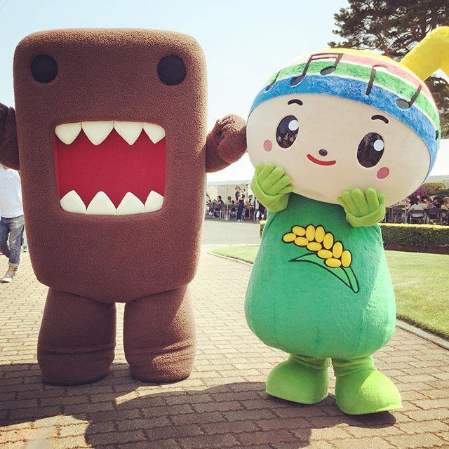 奥羽大学にがくとくんがいたよ、どーもくんとコラボかい。 #奥羽大学 #がくとくん #どーもくん #nhk #郡山市 #koriyama #福島 #fukushima #富田町 #ゆるキャラ #明日へ #ワンワン
