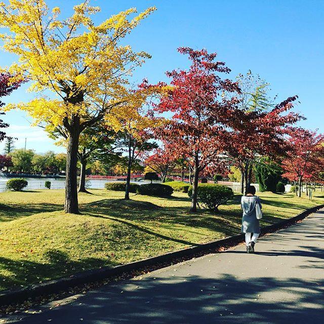 開成山もすっかり紅葉シーズンでござる、駐車場もあるよ! #開成山公園 #開成山 #紅葉 #郡山 #郡山市 #公園 #駐車場 #散歩 #秋 #秋限定 #肌寒い #ポケモン #ポケストップ #スマホ